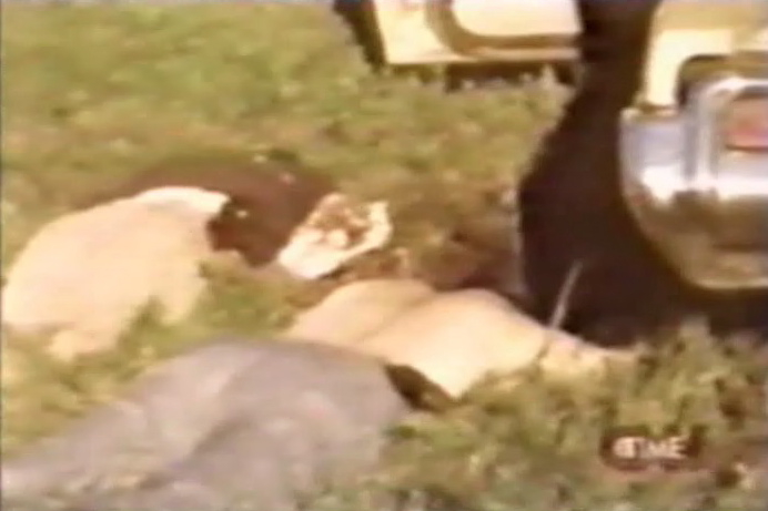 From the video:  Agent Williams lies face down dead after being shot in the face by Peltier.  Williams had removed his shirt to make a tourniquet for Agent Coler.